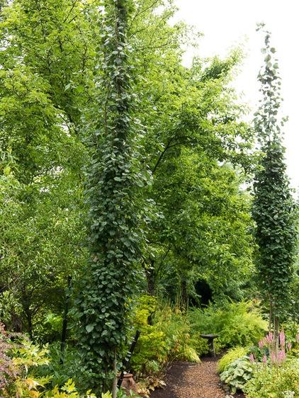 Narrow trees for tight garden spaces decor ideas for Narrow trees for tight spaces